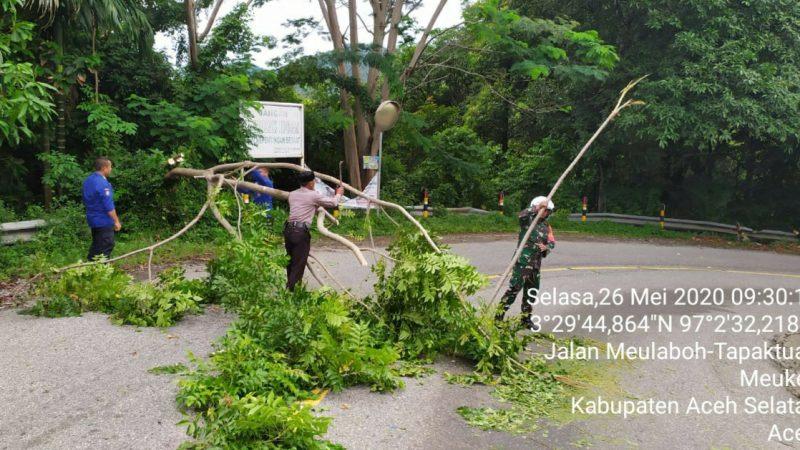 Kerjasama TNI/Polri, Petugas Damkar, Masyarakat dalam Membersihkan Pohon Tumbang di Jalan Lintas Nasional