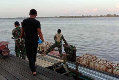 Kerja Cepat dan Tangkas Anggota TNI dalam Proses Pengangkutan Kayu Bahan Plapon ke Kelotok