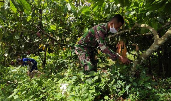 Kemanunggalan TNI dan Rakyat, Satgas Bersihkan Gulma di TMMD Kodim Tapsel