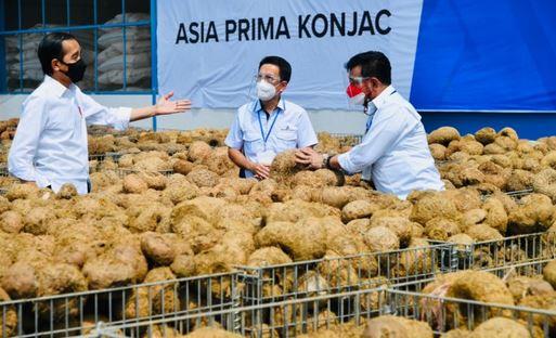 Presiden Joko Widodo; Porang Komoditas Masa Depan, Agar Memberikan Nilai Tambah ke Petani