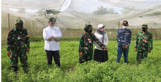 Kebun Mustang Lanud  Roesmin Nerjadin Kawasan Mandiri Pangan Terbaik Di Pekanbaru