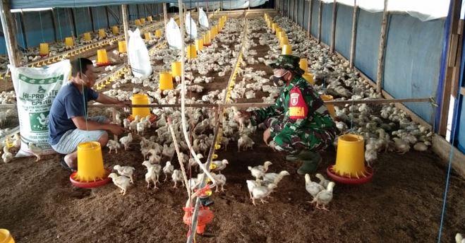 Babinsa Koramil Tenggarong Komsos dengan  Peternak Ayam Potong