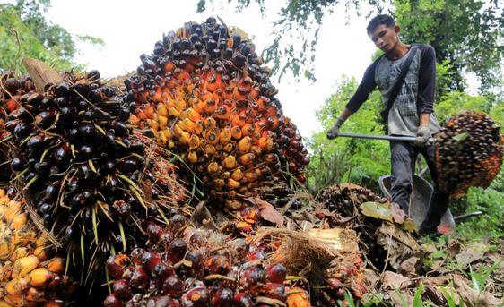 Indonesia Dorong 160 Produk Hilir Sawit Mampu Diproduksi di Dalam Negeri